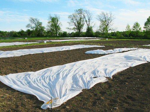 Агроволокно , спанбонд - СУФ, защита от заморозков.