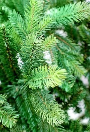 Самая дорогая и красивая ель изготавливается из полипропилена. Это так называемая литая пластмассовая елка.
