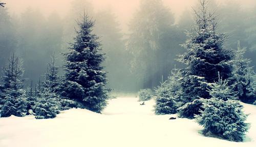 Живая елка - это часть природы!