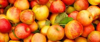 Соковыжималка для яблок большой производительности