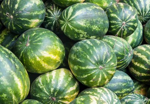 Арбуз – тыквина, но его можно называть ягодой, овощем или фруктом.
