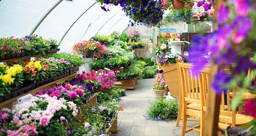 При правильном уходе каждая теплица станет маленьким Эдемским садом на вашем участке.
