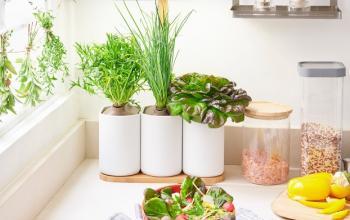 Микросад для дома: дизайнерские решения от Prêt à Pousser